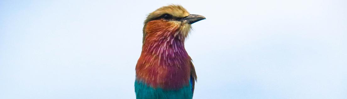 Tanzania bird safari