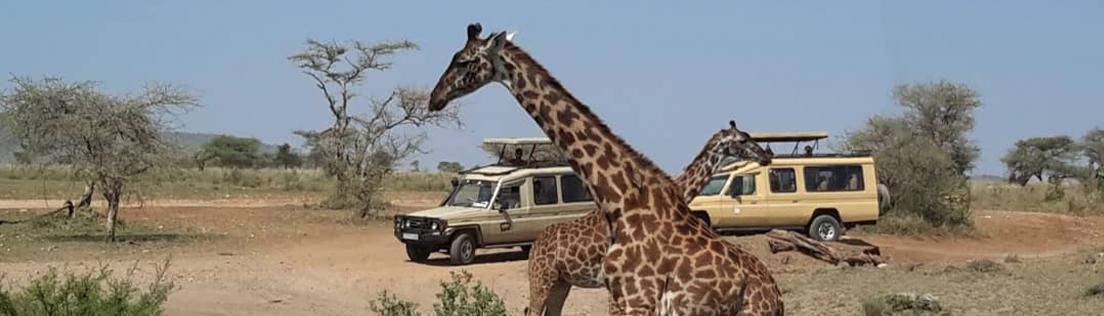 serengeti to Ngorongoro crater